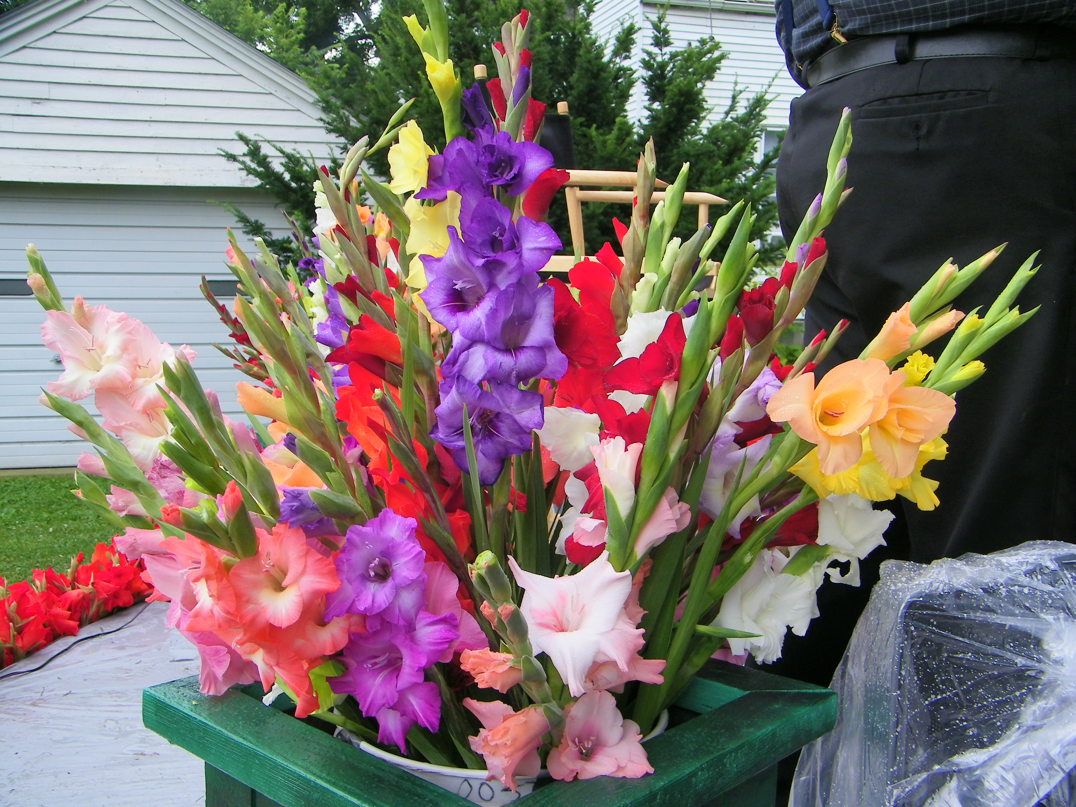 80th Annual Gladiolus Festival
