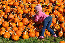 Vana's Pumpkin Land